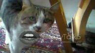 konusan kedim