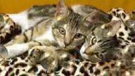 güzel kediler