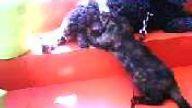 kedi we köpek aşkı!!!!