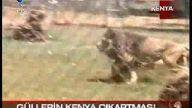Abdullah Gül ve Eşi Afrika'da, Vahşi Hayvanlarla..