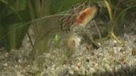 karides gıdası ölü balık