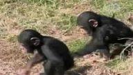 Maymun ve arkadaşları