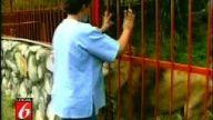 Aslanın aşkı
