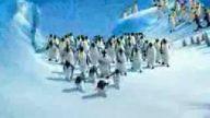 ankaralı penguenler