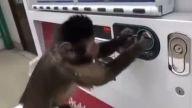 Makinadan İçecek Alan Zeki Maymun
