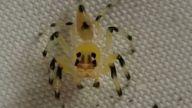 Dünyanın En Zehirli Örümceği