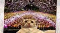 Kedilerin Selfie ile İmtihanı