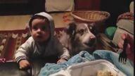 Yemeği Alabilmek İçin Mama Diyen Köpek