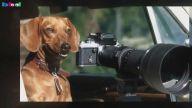 Fotoğrafçılığa Merak Salan Hayvanlar