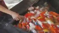 Balıkları Biberonla Besleyen Kız