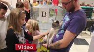 13 Kilo Ağırlığındaki Kedi