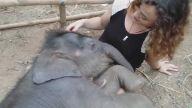 Kucağında Sevimli Fil yavrusunu Uyutan Kadın