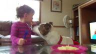 Bebeğin Ağzından Yemek Çalan Köpek
