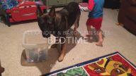 Küçük Dostunun Uyku Vakti Gelince Odayı Toplayan Köpek