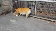 Yavrusuna Oturmayı Öğreten Köpek