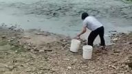 Yemek İçin Çıldıran Balıklar Suyun Dışına Kadar Çıktılar