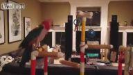 Kendini Müziğe Kaptıran Papağan
