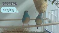Kuşun Ağır Çekim Dans Hareketleri