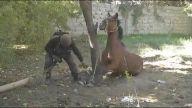 Ölüme Terk Edilen Atın Özel Harekat Tarafından Salıverilmesi