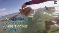 Tek Gözlü Sörfçü Kedi Kuli'nin Eğlencesi
