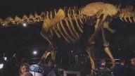 Yaşamış En Büyük Kara Hayvanı 'Titanosaur'un İskeleti ile Tanışın