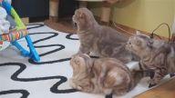 İlk Defa Bir Bebekle Karşılaşan Kedilerin Minnoş Tepkileri