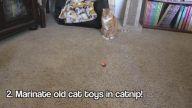 Eğer Kedi Sahibiyseniz Kendiniz ve Onlar İçin Uygulayabileceğiniz 5 Pratik Bilgi