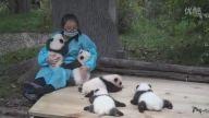 Dünyanın En Güzel İşi: Panda Sevicilik