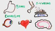 Vücudunuz Neden Bu Kadar Muhteşem?