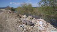 Bursa'nın Köyünde Köpek Balığı Paniği
