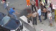 Sokak Köpeklerinin İnanılmaz Kavgası
