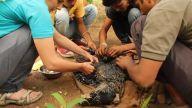 Sıcak Katrana Düşen Köpeği Hayata Döndüren Güzel İnsanlar