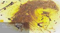 99 Milyon Yıllık Dinozor Kuyruğu - National Geographic