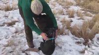 Avcı Köpeğine Go Pro Kamera Yerleştirmek