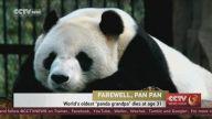 Dünyanın En Yaşlı Erkek Pandası Öldü