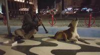 Köpeğin Klarnet Sesine Verdiği Tepki