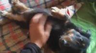 köpek eğitimi istanbul | kopekegitimii.com