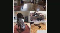 Evde Köpek Eğitimi ve Bakımı - Evdekopekegitimi.org
