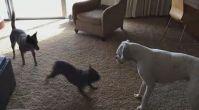 Köpek İtaat Eğitimleri - Evdekopekegitimi.org