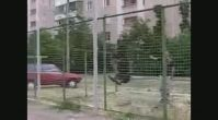 rottweiler istanbul - Rottweilerturkiye.com