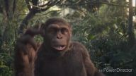 Çılgın maymunlar-at kendini diskolara