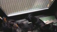 yavru köpek satılık - Satilikyavrukopek.org