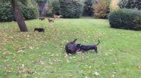 köpek eğitmeni | istanbulkopekegitimi.net