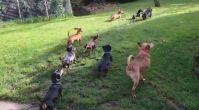 köpek eğitim çiftliği | istanbulkopekegitimi.net