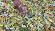 istanbul avrupa yakası köpek eğitimi | istanbulkopekegitimi.net