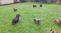 avrupa yakası köpek eğitim merkezi | istanbulkopekegitimi.net