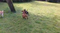 köpek eğitimi avrupa yakası | istanbulkopekegitimi.net