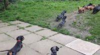 anadolu yakası köpek eğitim çiftliği | istanbulkopekegitimi.net