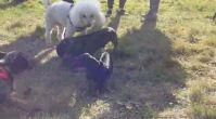köpek pansiyonu - kopekpansiyonu.org