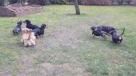 köpek oteli anadolu yakası - kopekpansiyonu.org
